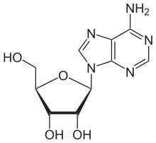 Adenosine.jpg