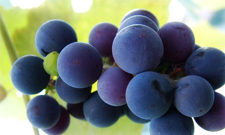 concord-grape-juice.jpg