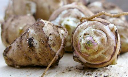 jerusalem-artichoke.jpg