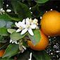 orange-flower-test.jpg
