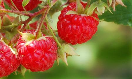 raspberry-juice.jpg